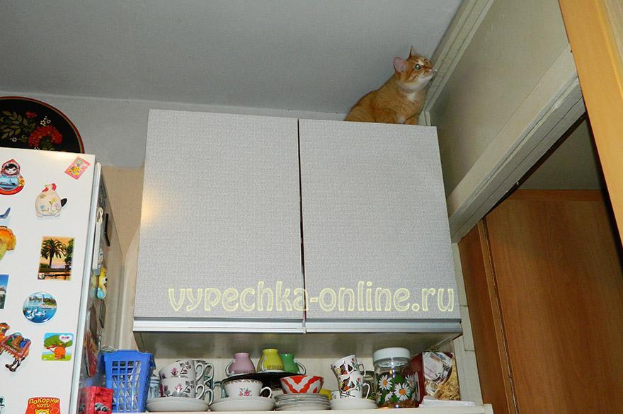 Лисик на шкафу