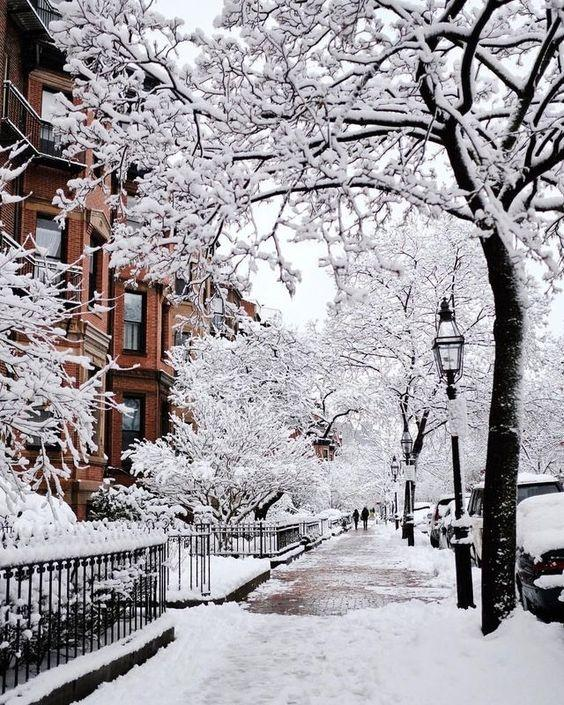 Деревья, зима, фонари