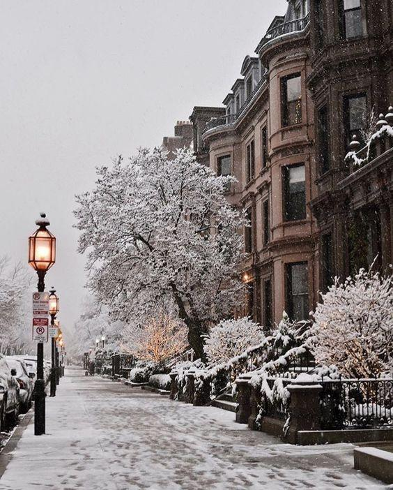 Деревья в снегу, фонари