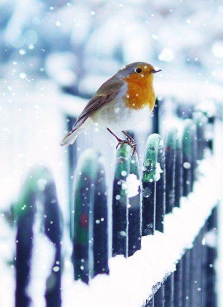 Птица на заборе зимой