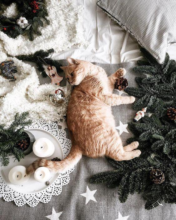 Рыжий кот и ёлка