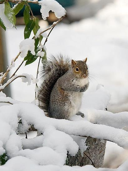 Белка, снег, лес