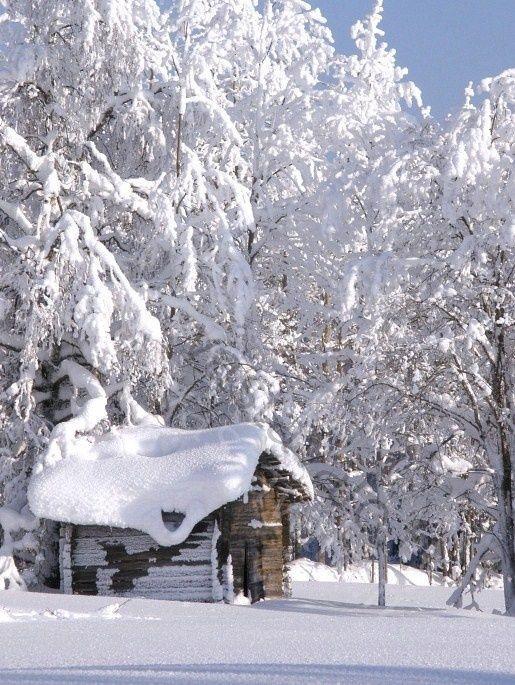 Ели в снегу, домик
