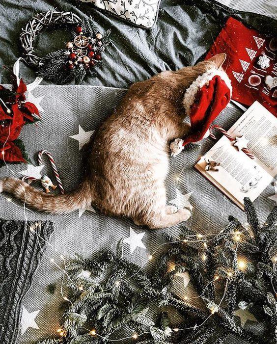 Рыжий кот, новый год