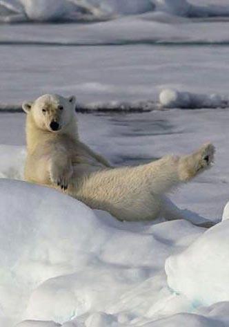 Белый медведь в снегу