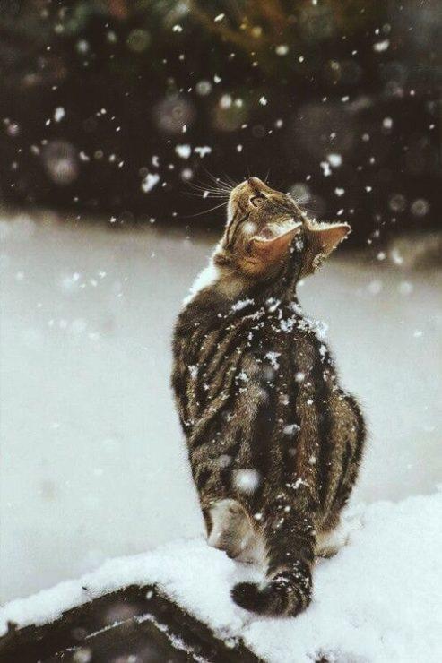 Котэ и снежинки