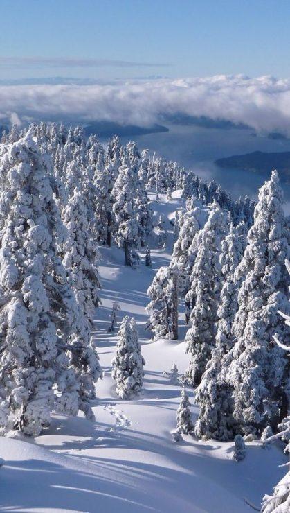 Красивый зимний лес