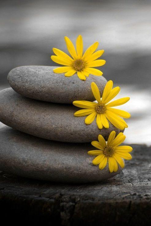 Камни, цветы
