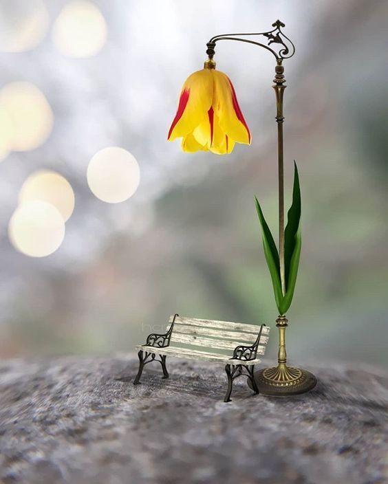 Тюльпан, фонарь, лавочка