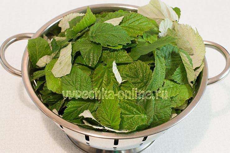 Малиновые листья для чая как и когда собирать