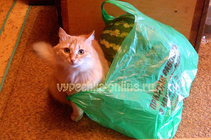 Кошка и арбуз